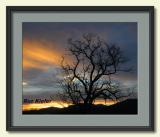 Walnut Tree at Sunset