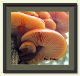 Mushroom Gills-framed.jpg