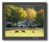 Horse and Home