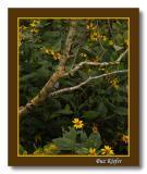 Sunflowers and Birch Branch