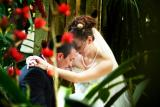 Brittany and Matthew's  wedding photography highlights  at Sarasota Marie Selby Botanical Gardens