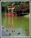 Ducks on the Garden Pond