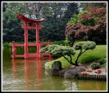 A Japanese Garden of Peace in Brooklyn, NY