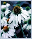 One Flower Among Many