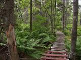 Burnside Trails.
