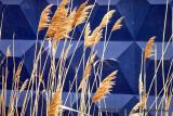 Dried Grass Blue Wall