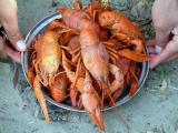 Don River-Crawfish cooked