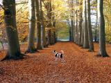 2: autumn leaves