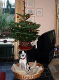 Joop's Dog Log - Sunday Dec 12