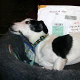 Joop's Dog Log - Saturday Dec 18