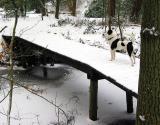 Joop's Dog Log - Tuesday Dec 28