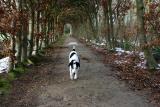 Joop's Dog Log - Monday Jan 24