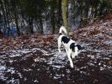 Joop's Dog Log - Thursday Jan 27
