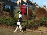 Joop's Dog Log - Saturday Feb 05