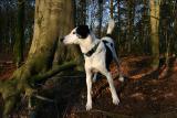 Joop's Dog Log - Monday Feb 07