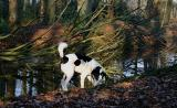 Joop's Dog Log - Wednesday Feb 16
