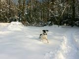 Joop's Dog Log - Saturday March 05