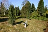 Joop's Dog Log - Sunday March 20