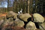 Joop's Dog Log - Saturday March 26