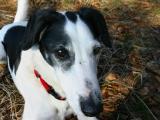 Joop's Dog Log - Saturday April 02