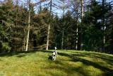Joop's Dog Log - Sunday April 10