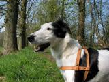 Joop's Dog Log - Monday April 18