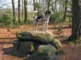 Joop's Dog Log - Wednesday April 20