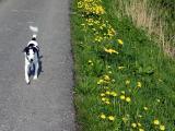 Joop's Dog Log - Sunday April 24