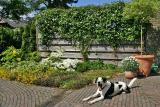 Joop's Dog Log - Monday May 23