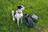 Joop's Dog Log - Sunday May 29