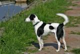 Joop's Dog Log - Tuesday June 7