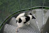 Joop's Dog Log - Saturday June 25