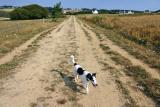 Joop's Dog Log - Friday August 05