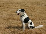 Joop's Dog Log - Thursday August 11  (Post)