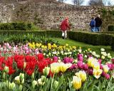 Parham Tulips