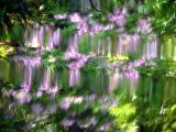river azalea