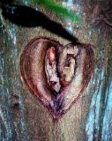 love hurts?