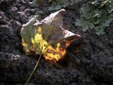 light, leaf and rock