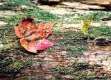 when good leaves go bad