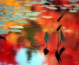 still, the lilies