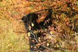 Mom black bear