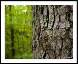 6/2/06 - A Tree Thingds20050529_0142awF Bark.jpg