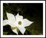 ds20050529_0205awF Blossom copy.jpg