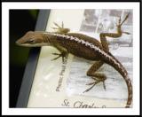 ds20050513_0060awF Lizard.jpg