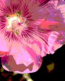 ds20050725_0012aw Blossom Posterized.jpg