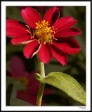 ds20051002_0016awF Red Flower.jpg