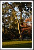 ds20051030_0062awF Capitol Hill Tree.jpg
