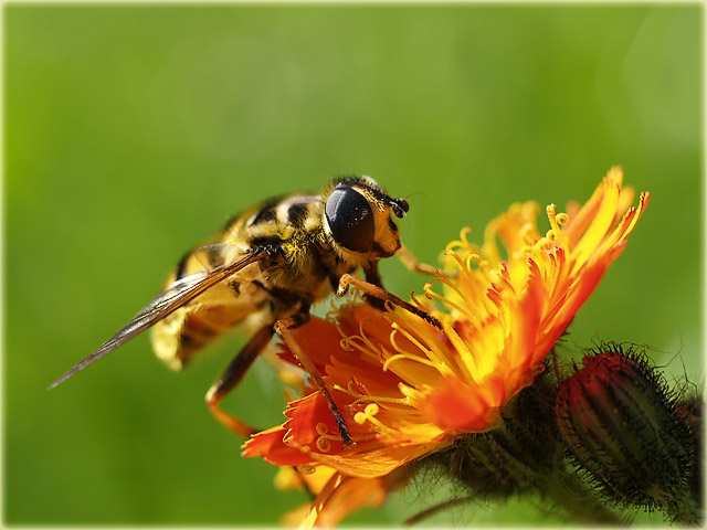 busy as a bee ;-)