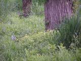 cheery spring flowers