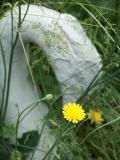 summer wild flower